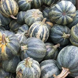 Cal Poly green stripey pumpkins.