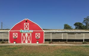 Billy's Egg Farm barn